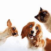 Three home pets