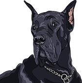 vector sketch domestic dog black Great Dane breed