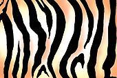zebra print image