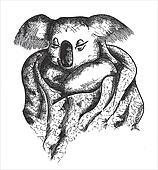 koala drawing vector
