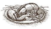 Lobster with lemon slices over white drawn by hand