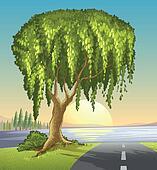 A big tree at the road