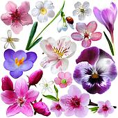 Spring flower collection isolated on white background