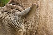 Rhino head.