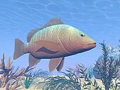 Mangrove fich underwater - 3D render