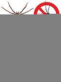 spider - warning signs