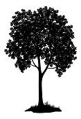 Chestnut tree, silhouette