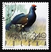 Postage stamp Poland 1970 Black Grouse, Game Bird