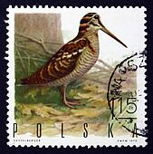 Postage stamp Poland 1970 Woodcock, Game Bird