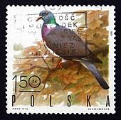 Postage stamp Poland 1970 Wood Pigeon, Game Bird