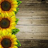 yellow sunflowers on wooden background