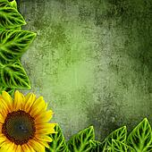 yellow sunflowers on green
