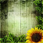 yellow sunflowers on wooden backgro