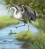 Illustration, crane hunting a frog in the water.