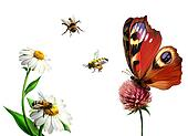 Butterfly, daisy, and Bees