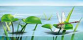 River scene: dragonfly on water grass, lake water