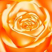 Orange Rose, vector