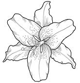 Clip Art Lily - Royalty Free - GoGraph