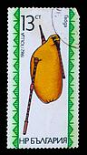 "BULGARIA - CIRCA 1982: A stamp printed in BULGARIA , Bulgarian folk music instrument ""bagpipe"", circa 1982"