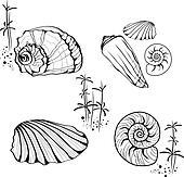 Sea Shells and Snails