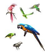 Pink, Gray and green parrot, macaw, Budgerigar, Isolated Illustration on white background.