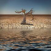 Desert Flood and tree