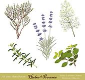 Herbes de Provence, French Herbs