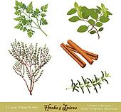Herbs and Spices for Cooking