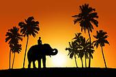 elephant and a rider on tropical sunset background