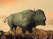 Bison by sunset- 3D render
