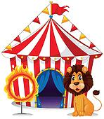 A lion and a fire ring in front of the circus tent