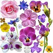 Set of botanical spring flowers
