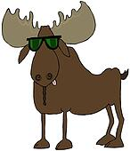 Moose wearing sunglasses