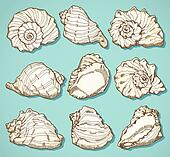 Seashell set in vintage style