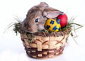 bunny and Easter eggs on green grass