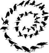 Carrion Crow in a spiral