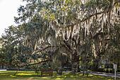 Bench in Park Under Massive Oak with Spanish Moss