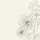 Branch of Chrysanthemum