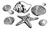 sea shells and starfish silhouettes