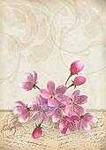 Realistic cherry blossom flower