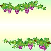 The branches of grapes