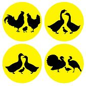 family farm poultry