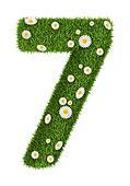 Natural grass number 7