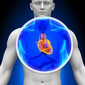 Medical X-Ray Scan - Heart