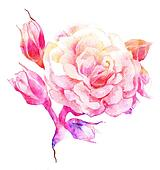 Flower rose color sketch