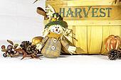 Scarecrow Harvest