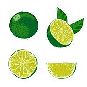 Vector illustration of a lime fruit.