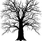 Old branched tree