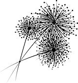 Dandelion flowers for your design