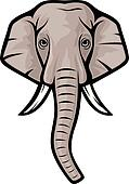 elephant head (indian elephant)